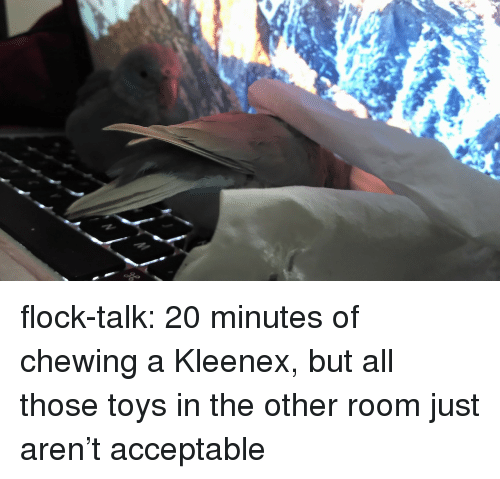 kleenex: flock-talk:  20 minutes of chewing a Kleenex, but all those toys in the other room just aren't acceptable