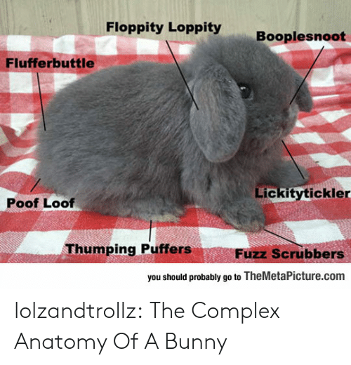 anatomy: Floppity Loppity  Booplesnoot  Flufferbuttle  Lickitytickler  Poof Loof  Thumping Puffers  Fuzz Scrubbers  you should probably go to TheMetaPicture.com lolzandtrollz:  The Complex Anatomy Of A Bunny