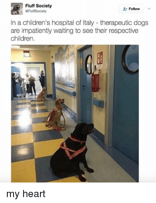 Children, Dogs, and Children's Hospital: Fluff Society  Follow  eFluffSociety  In a children's hospital of Italy therapeutic dogs  are impatiently waiting to see their respective  children. my heart