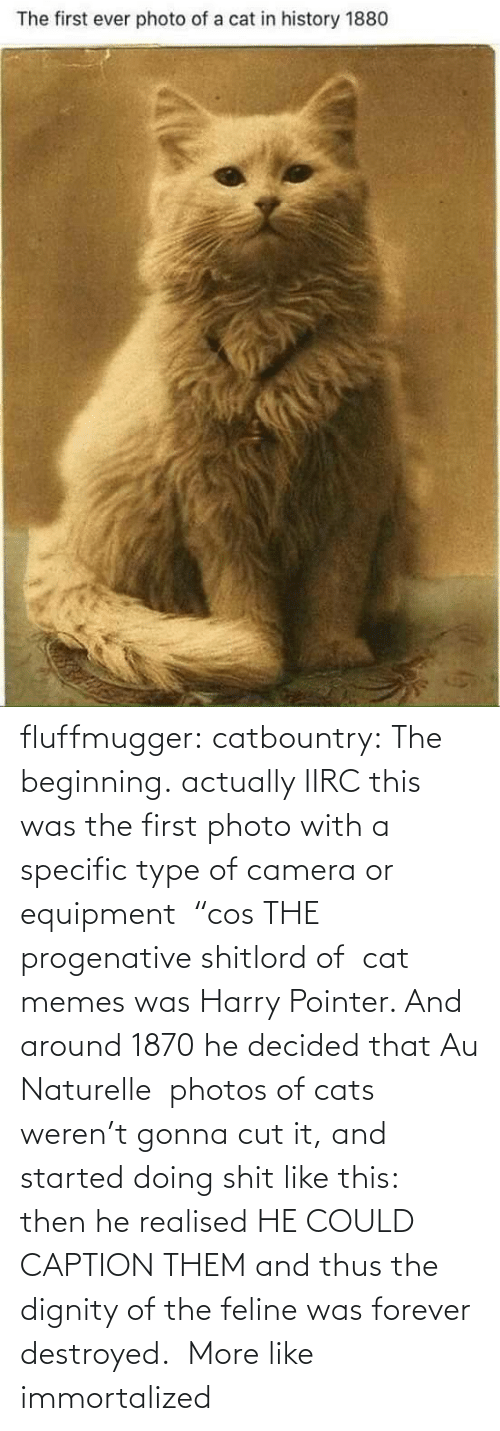 "harry: fluffmugger:  catbountry: The beginning. actually IIRC this was the first photo with a specific type of camera or equipment  ""cos THE progenative shitlord of  cat memes was Harry Pointer. And around 1870 he decided that Au Naturelle  photos of cats weren't gonna cut it, and started doing shit like this:  then he realised HE COULD CAPTION THEM and thus the dignity of the feline was forever destroyed.     More like immortalized"