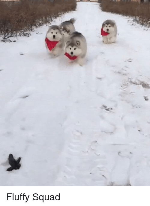 Squad and Fluffy: Fluffy Squad