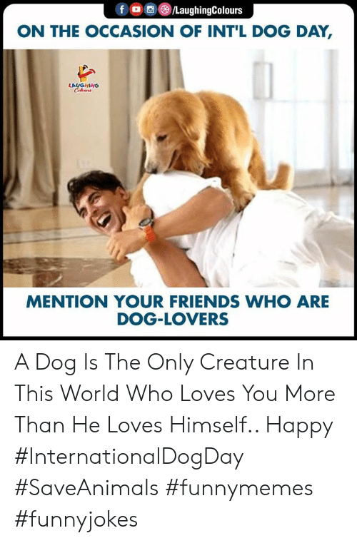 dog lovers: foC/LaughingColours  ON THE OCCASION OF INT'L DOG DAY,  LAUGHING  Celewrs  MENTION YOUR FRIENDS WHO ARE  DOG-LOVERS A Dog Is The Only Creature In This World Who Loves You More Than He Loves Himself.. Happy #InternationalDogDay #SaveAnimals #funnymemes #funnyjokes