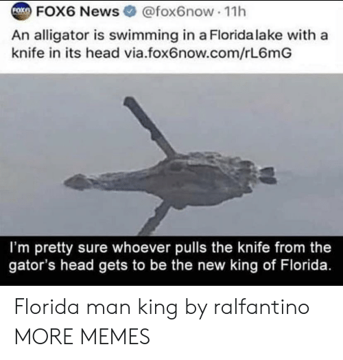 Swimming: FOK  FOX6 News @fox6now 11h  An alligator is swimming in a Florida lake with a  knife in its head via.fox6now.com/rL6mG  I'm pretty sure whoever pulls the knife from the  gator's head gets to be the new king of Florida. Florida man king by ralfantino MORE MEMES