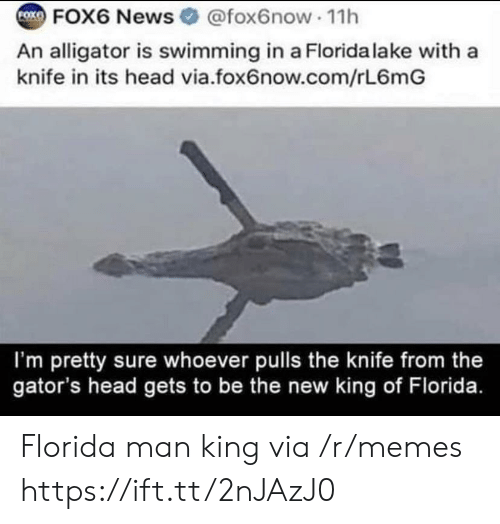 im-pretty-sure: FOK  FOX6 News @fox6now 11h  An alligator is swimming in a Florida lake with a  knife in its head via.fox6now.com/rL6mG  I'm pretty sure whoever pulls the knife from the  gator's head gets to be the new king of Florida. Florida man king via /r/memes https://ift.tt/2nJAzJ0