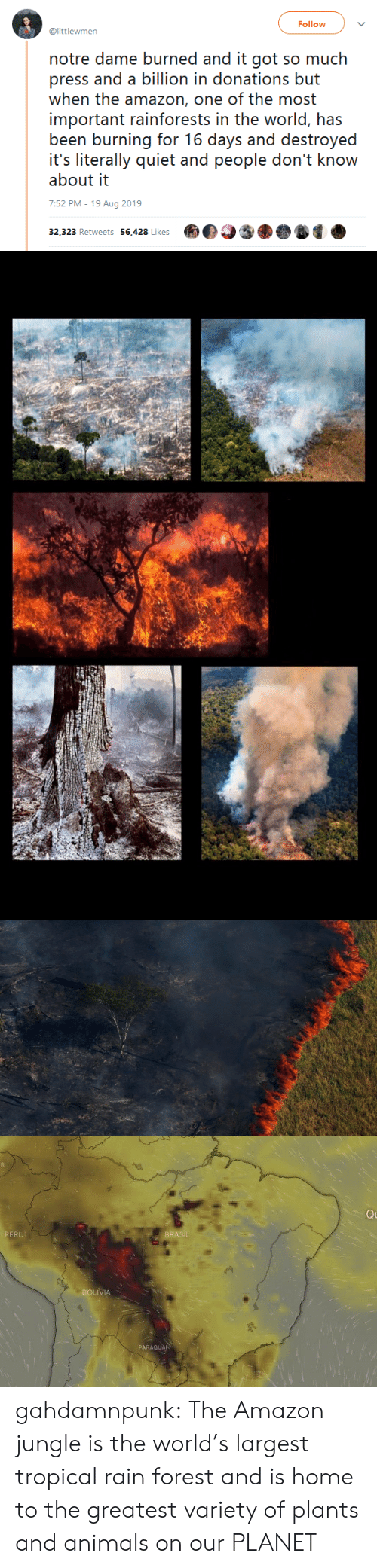 jungle: Follow  @littlewmen  notre dame burned and it got so much  press and a billion in donations but  when the amazon, one of the most  important rainforests in the world, has  been burning for 16 days and destroyed  it's literally quiet and people don't know  about it  7:52 PM - 19 Aug 2019  32,323 Retweets 56,428 Likes   Q  PERU  BRASIL  BOLIVIA  PARAGUAN gahdamnpunk: The Amazon jungle is the world's largest tropical rain forest and is home to the greatest variety of plants and animals on our PLANET