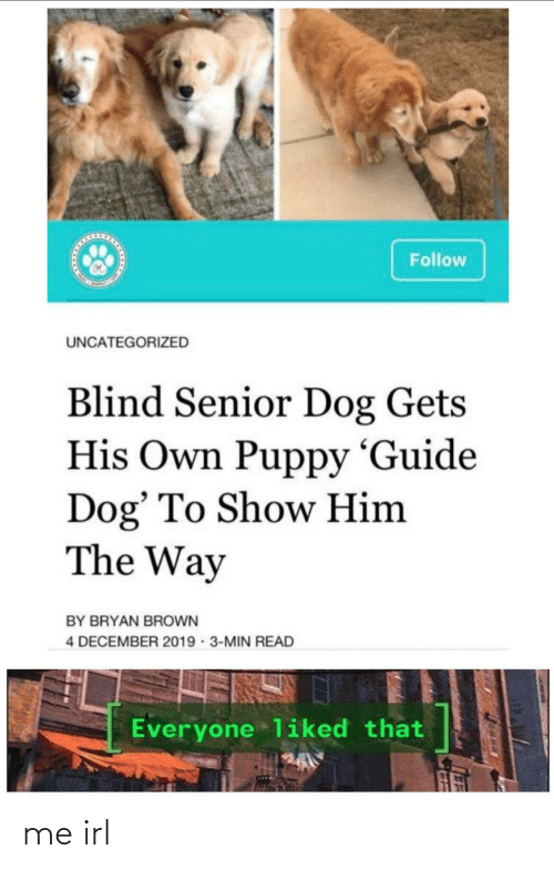 senior: Follow  UNCATEGORIZED  Blind Senior Dog Gets  His Own Puppy 'Guide  Dog' To Show Him  The Way  BY BRYAN BROWN  4 DECEMBER 2019 · 3-MIN READ  Everyone liked that me irl