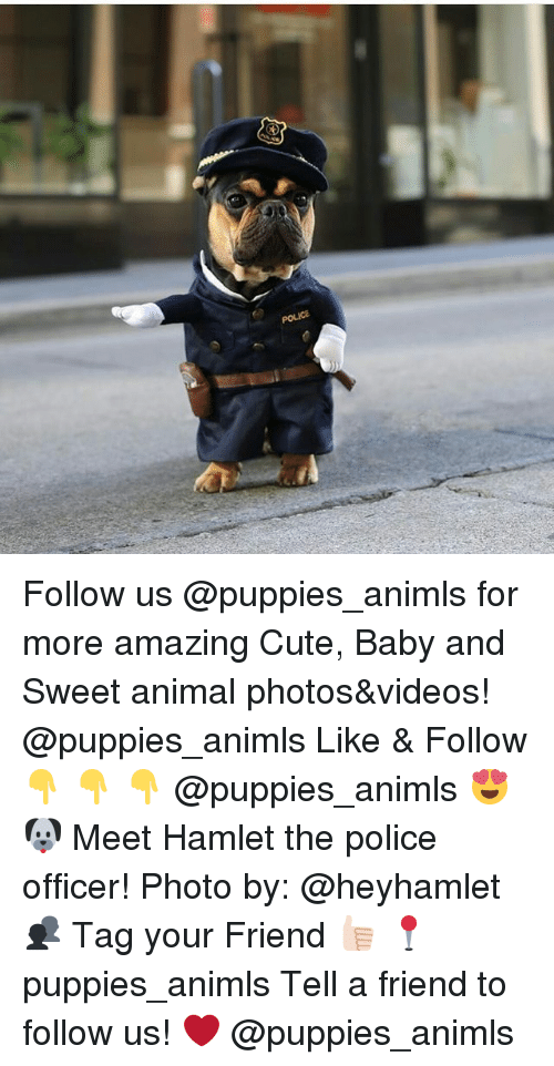 Anime Photo: Follow us @puppies_animls for more amazing Cute, Baby and Sweet animal photos&videos! @puppies_animls Like & Follow 👇 👇 👇 @puppies_animls 😍 🐶 Meet Hamlet the police officer! Photo by: @heyhamlet 👥 Tag your Friend 👍🏻 📍 puppies_animls Tell a friend to follow us! ❤ @puppies_animls