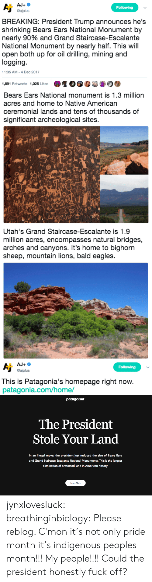 Native American: Following  @ajplus  BREAKING: President Trump announces he's  shrinking Bears Ears National Monument by  nearly 90% and Grand Staircase-Escalante  National Monument by nearly half. This will  open both up for oil drilling, mining and  logging  11:35 AM-4 Dec 2017  1,891 Retweets 1,025 Likes   Bears Ears National monument is 1.3 million  acres and home to Native American  ceremonial lands and tens of thousands of  significant archeological sites.  sh   Utah's Grand Staircase-Escalante is 1.9  million acres, encompasses natural bridges,  arches and canyons. It's home to bighorn  sheep, mountain lions, bald eagles   Following  @ajplus  This is Patagonia's homepage right now  patagonia.com/home/   patagonia  The President  Stole Your Land  In an illegal move, the president just reduced the size of Bears Ears  and Grand Staircase-Escalante National Monuments. This is the largest  elimination of protected land in American history.  Learn More jynxlovesluck:  breathinginbiology: Please reblog.   C'mon it's not only pride month it's indigenous peoples month!!! My people!!!! Could the president honestly fuck off?