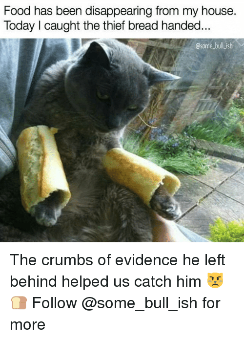 Food, Memes, and My House: Food has been disappearing from my house.  Today I caught the thief bread handed  @some bull ish The crumbs of evidence he left behind helped us catch him 😾🍞 Follow @some_bull_ish for more