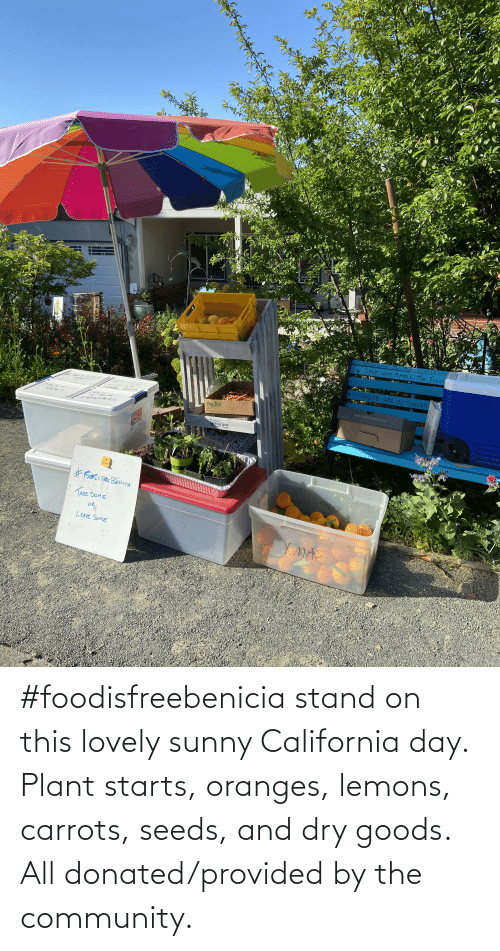 seeds: #foodisfreebenicia stand on this lovely sunny California day. Plant starts, oranges, lemons, carrots, seeds, and dry goods. All donated/provided by the community.