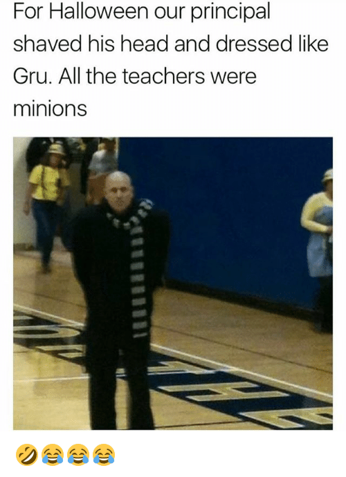 Halloween, Head, and Gru: For Halloween our principal  shaved his head and dressed like  Gru. All the teachers were  minions 🤣😂😂😂