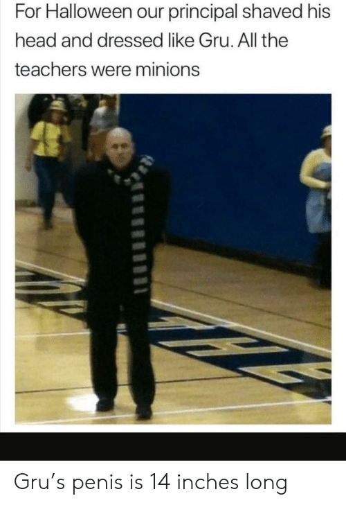 Principal: For Halloween our principal shaved his  head and dressed like Gru. All the  teachers were minions Gru's penis is 14 inches long