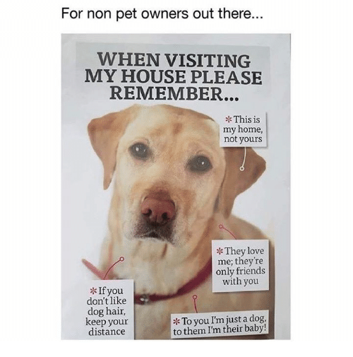 Dank, Friends, and Love: For non pet owners out there.  WHEN VISITING  MY HOUSE PLEASE  REMEMBER...  This is  my home,  not yours  They love  me; they're  only friends  with you  If you  don't like  dog hair,  keep your  distance  To you I'm just a dog,  to them I'm their baby!