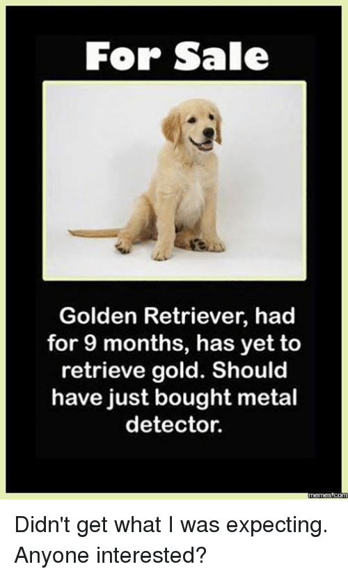metal detector: For Sale  Golden Retriever, had  for 9 months, has yet to  retrieve gold. Should  have just bought metal  detector.  mermes com Didn't get what I was expecting. Anyone interested?