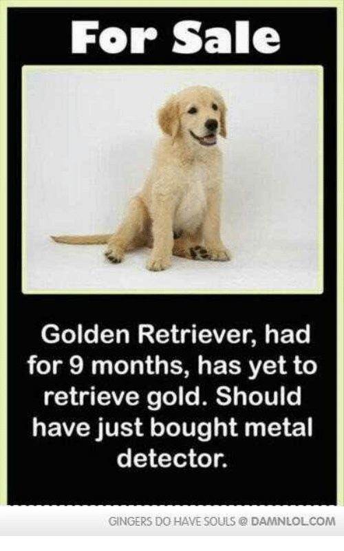 metal detector: For Sale  Golden Retriever, had  for 9 months, has yet to  retrieve gold. Should  have just bought metal  detector.  GINGERS DO HAVE SOULS DAMNLOLCOM