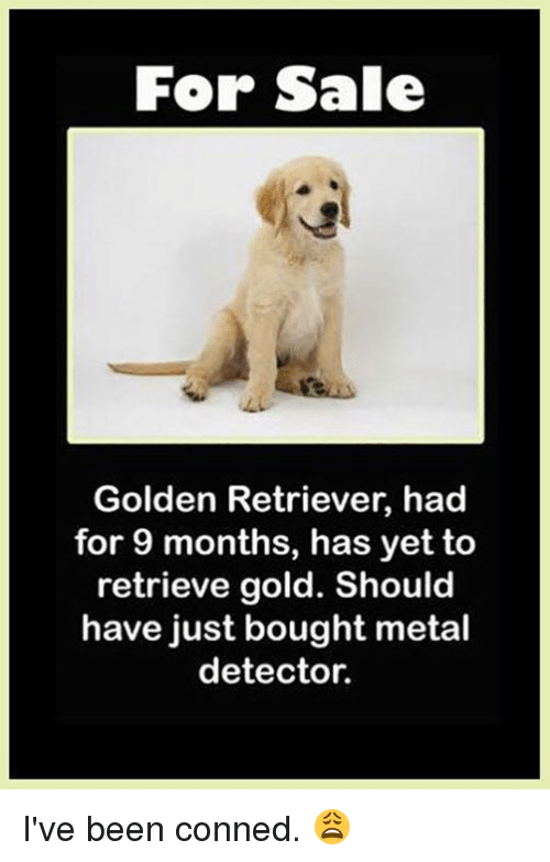 metal detector: For Sale  Golden Retriever, had  for 9 months, has yet to  retrieve gold. Should  have just bought metal  detector. I've been conned. 😩