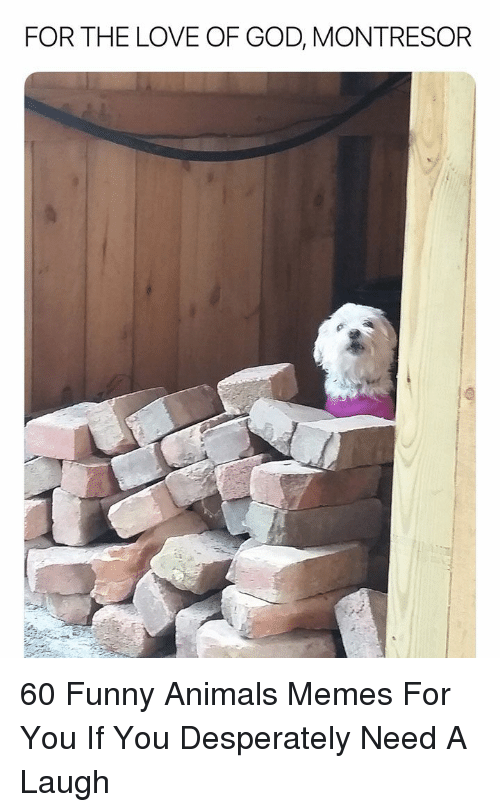 Animals Memes: FOR THE LOVE OF GOD, MONTRESOR 60 Funny Animals Memes For You If You Desperately Need A Laugh