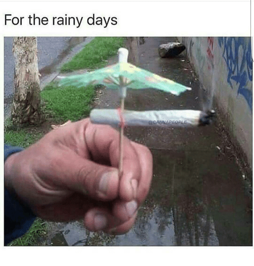 Cold Rainy Day Funny Quotes: Funny Rainy Memes Of 2017 On SIZZLE