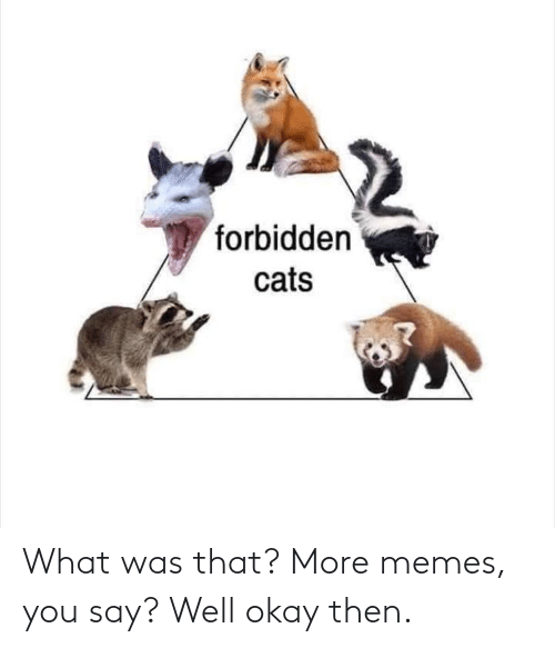 Forbidden: forbidden  cats What was that? More memes, you say? Well okay then.