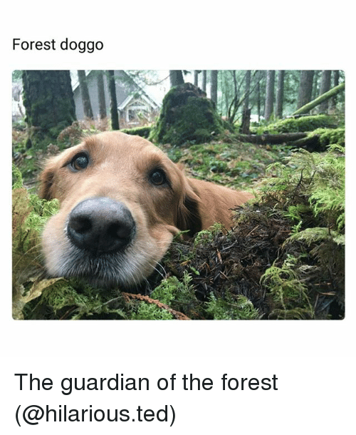 Funny, Ted, and Guardian: Forest doggo The guardian of the forest (@hilarious.ted)