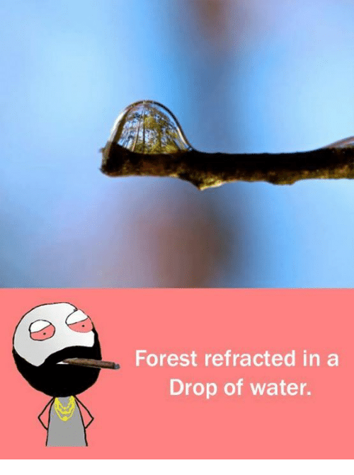 memes: Forest refracted in a  Drop of water.