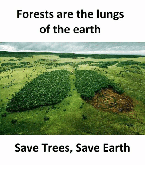 forests are the lungs of the earth Tropical forests are essential for sustainable growth in africa and beyond but we' re killing them.