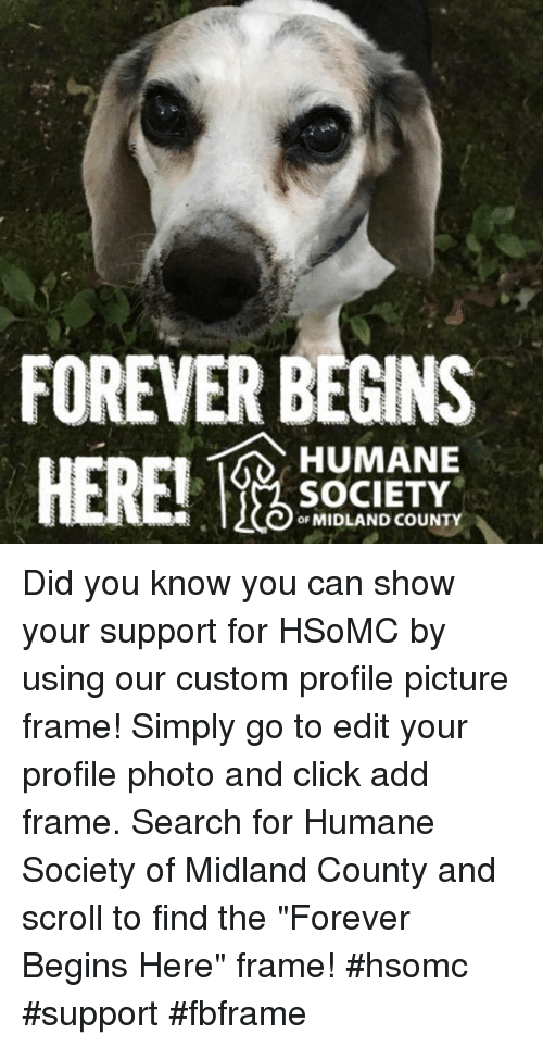 FOREVER BEGINS HERE! HUMANE SOCIETY oF MIDLAND COUNTY Did ...