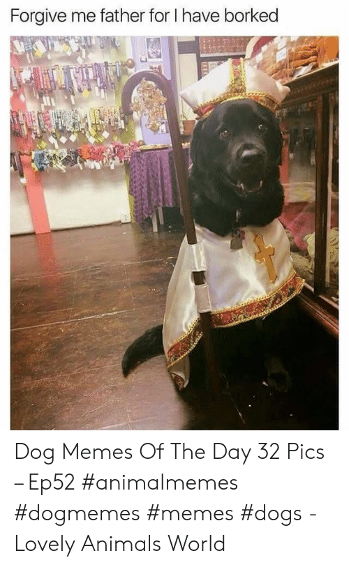 Borked: Forgive me father for I have borked Dog Memes Of The Day 32 Pics – Ep52 #animalmemes #dogmemes #memes #dogs - Lovely Animals World