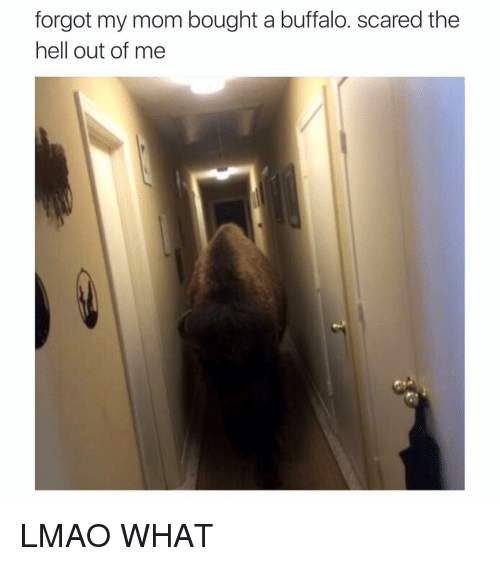 Lmao, Moms, and Scare: forgot my mom bought a buffalo. scared the  hell out of me LMAO WHAT