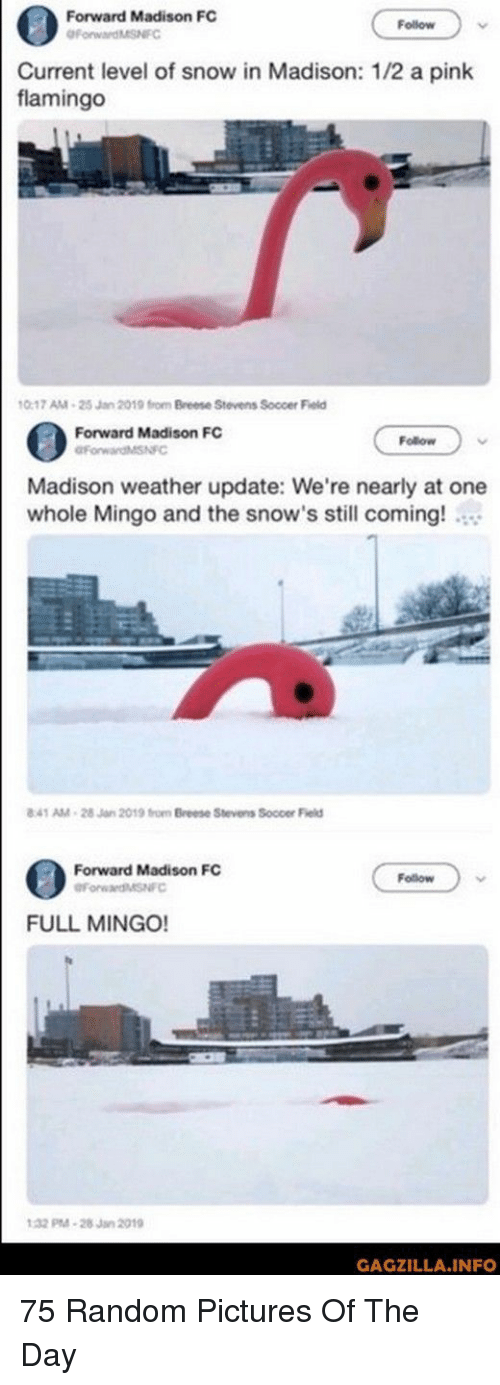 a pink: Forward Madison FC  Follow  urrent level of snow in Madison: 1/2 a pink  flamingo  0-17 AM-25 Jan 2019 from Breese Stevens Soccer Field  Forward Madison FC  Follow  Madison weather update: We're nearly at one  whole Mingo and the snow's still coming!  41 AM-28 Jan 2019 from Breese Stevens Soccer Field  Forward Madison FC  Follow  FULL MINGO!  32 M-28Jan 2019  GAGZILLA.INFO 75 Random Pictures Of The Day