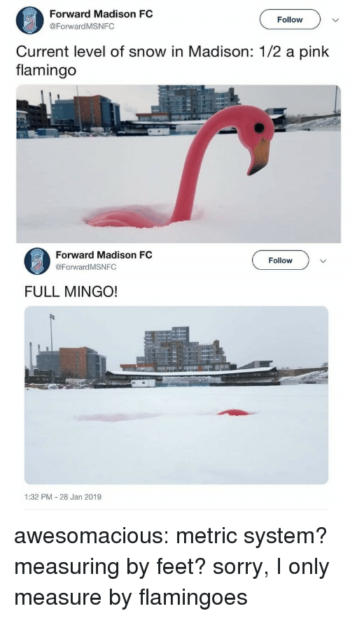 metric system: Forward Madison FC  @ForwardMSNFC  Follow  Current level of snow in Madison: 1/2 a pink  flamingo  Forward Madison FC  @Forward MSNFC  Follow  FULL MINGO!  1:32 PM 28 Jan 2019 awesomacious:  metric system? measuring by feet? sorry, I only measure by flamingoes
