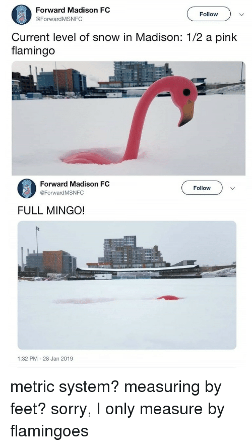 metric system: Forward Madison FC  @ForwardMSNFC  Follow  Current level of snow in Madison: 1/2 a pink  flamingo  Forward Madison FC  @Forward MSNFC  Follow  FULL MINGO!  1:32 PM 28 Jan 2019 metric system? measuring by feet? sorry, I only measure by flamingoes