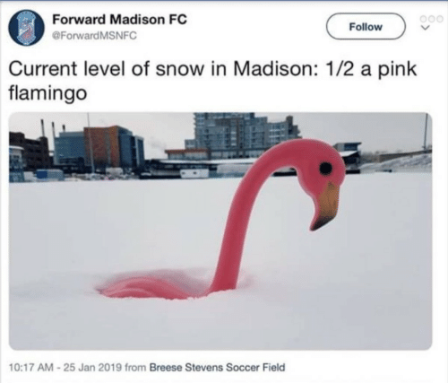 a pink: Forward Madison FC  @ForwardMSNFC  Follow  Current level of snow in Madison: 1/2 a pink  flamingo  10:17 AM-25 Jan 2019 from Breese Stevens Soccer Field