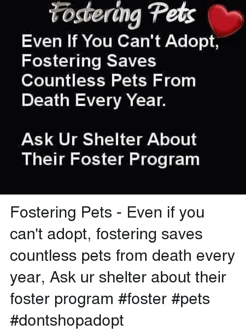 Memes, Programming, and 🤖: Fostering Pets  Even if You Can't Adopt,  Fostering Saves  Countless Pets From  Death Every Year  Ask Ur Shelter About  Their Foster Program Fostering Pets - Even if you can't adopt, fostering saves countless pets from death every year, Ask ur shelter about their foster program               #foster #pets #dontshopadopt
