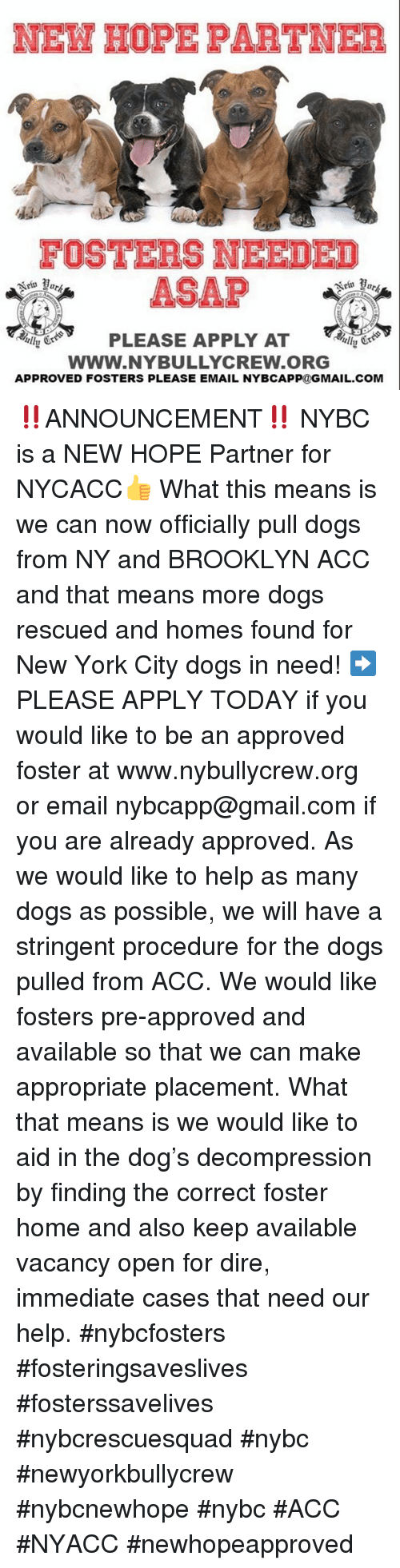 Dogs, Memes, and New York: FOSTERS NEEDED  ASAP  PLEASE APPLY AT  Www.NYBULLYCREW.ORG  APPROVED FOSTERS PLEASE EMAIL NYBCAPP@GMAIL.COM ‼️ANNOUNCEMENT‼️  NYBC is a NEW HOPE Partner for NYCACC👍 What this means is we can now officially pull dogs from NY and BROOKLYN ACC and that means more dogs rescued and homes found for New York City dogs in need! ➡️ PLEASE APPLY TODAY if you would like to be an approved foster at www.nybullycrew.org or email nybcapp@gmail.com if you are already approved.   As we would like to help as many dogs as possible, we will have a stringent procedure for the dogs pulled from ACC. We would like fosters pre-approved and available so that we can make appropriate placement. What that means is we would like to aid in the dog's decompression by finding the correct foster home and also keep available vacancy open for dire, immediate cases that need our help.   #nybcfosters #fosteringsaveslives #fosterssavelives #nybcrescuesquad #nybc #newyorkbullycrew #nybcnewhope #nybc #ACC #NYACC #newhopeapproved