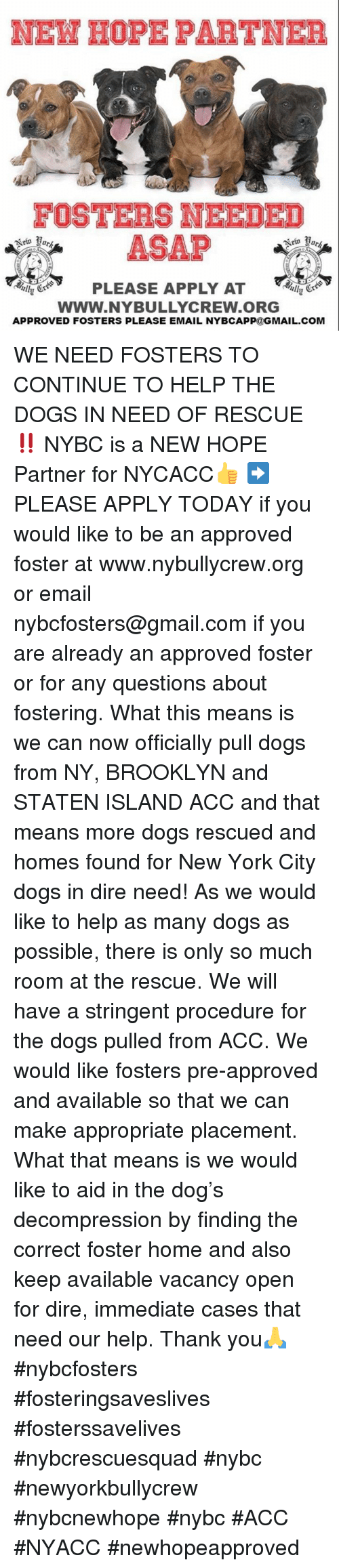 Dogs, Memes, and New York: FOSTERS NEEDED  ASAP  PLEASE APPLY AT  Www.NYBULLYCREW.ORG  APPROVED FOSTERS PLEASE EMAIL NYBCAPP@GMAIL.COM WE NEED FOSTERS TO CONTINUE TO HELP THE DOGS IN NEED OF RESCUE‼️ NYBC is a NEW HOPE Partner for NYCACC👍 ➡️ PLEASE APPLY TODAY if you would like to be an approved foster at www.nybullycrew.org or email nybcfosters@gmail.com if you are already an approved foster or for any questions about fostering.   What this means is we can now officially pull dogs from NY, BROOKLYN and STATEN ISLAND ACC and that means more dogs rescued and homes found for New York City dogs in dire need!  As we would like to help as many dogs as possible, there is only  so much room at the rescue. We will have a stringent procedure for the dogs pulled from ACC. We would like fosters pre-approved and available so that we can make appropriate placement. What that means is we would like to aid in the dog's decompression by finding the correct foster home and also keep available vacancy open for dire, immediate cases that need our help. Thank you🙏  #nybcfosters #fosteringsaveslives #fosterssavelives #nybcrescuesquad #nybc #newyorkbullycrew #nybcnewhope #nybc #ACC #NYACC #newhopeapproved