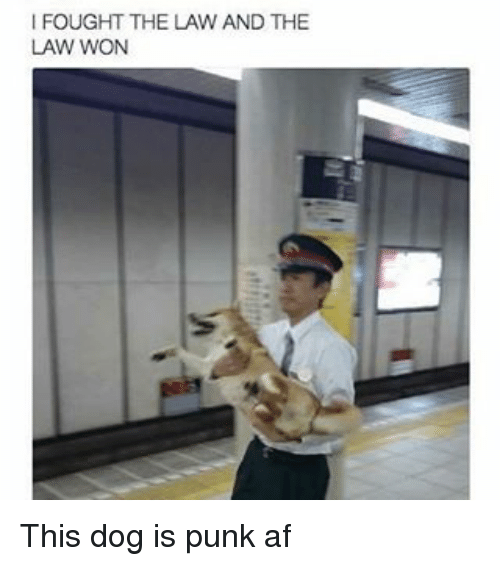 Af, Memes, and 🤖: FOUGHT THE LAW AND THE  LAW WON This dog is punk af