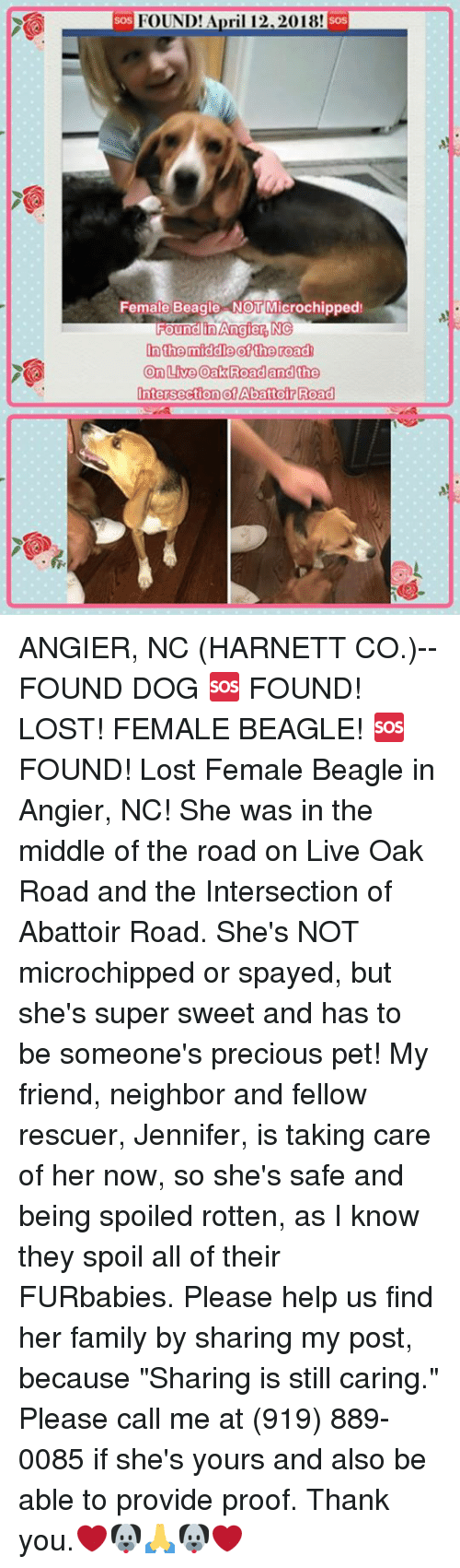 "Family, Memes, and Precious: FOUND! Ari 12,2018!  SoS  soS  Female Beagle-NOT Microchipped  undin Angie  In the middle ofthe road  On Live Oak Roadand the  IntersectionotAbattoir Roaa ANGIER, NC (HARNETT CO.)-- FOUND DOG  🆘 FOUND! LOST! FEMALE BEAGLE! 🆘  FOUND! Lost Female Beagle in Angier, NC! She was in the middle of the road on Live Oak Road and the Intersection of Abattoir Road. She's NOT microchipped or spayed, but she's super sweet and has to be someone's precious pet! My friend, neighbor and fellow rescuer, Jennifer, is taking care of her now, so she's safe and being spoiled rotten, as I know they spoil all of their FURbabies. Please help us find her family by sharing my post, because ""Sharing is still caring."" Please call me at (919) 889-0085 if she's yours and also be able to provide proof. Thank you.❤️🐶🙏🐶❤️"