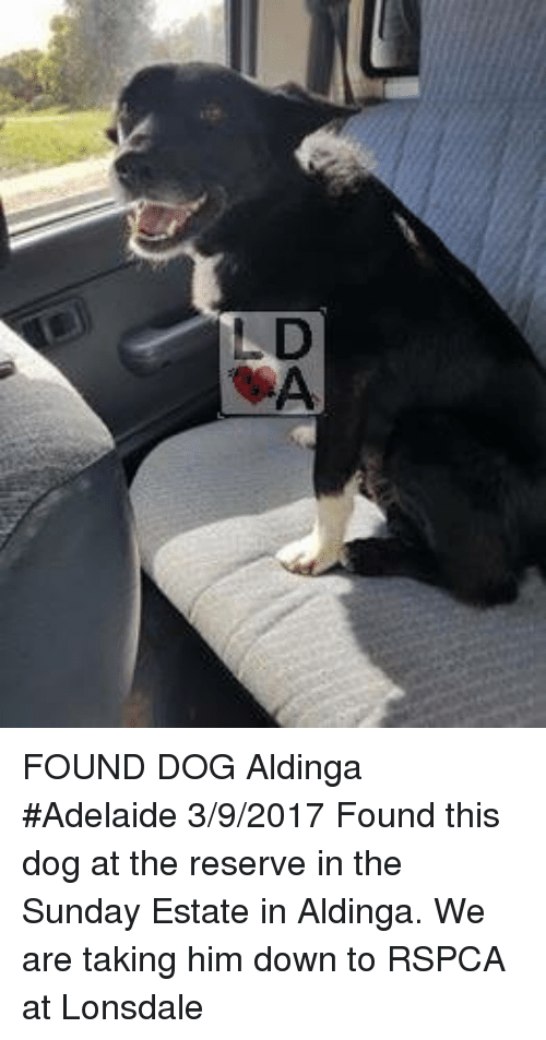 the sundays: FOUND DOG Aldinga #Adelaide 3/9/2017 Found this dog at the reserve in the Sunday Estate in Aldinga. We are taking him down to RSPCA at Lonsdale