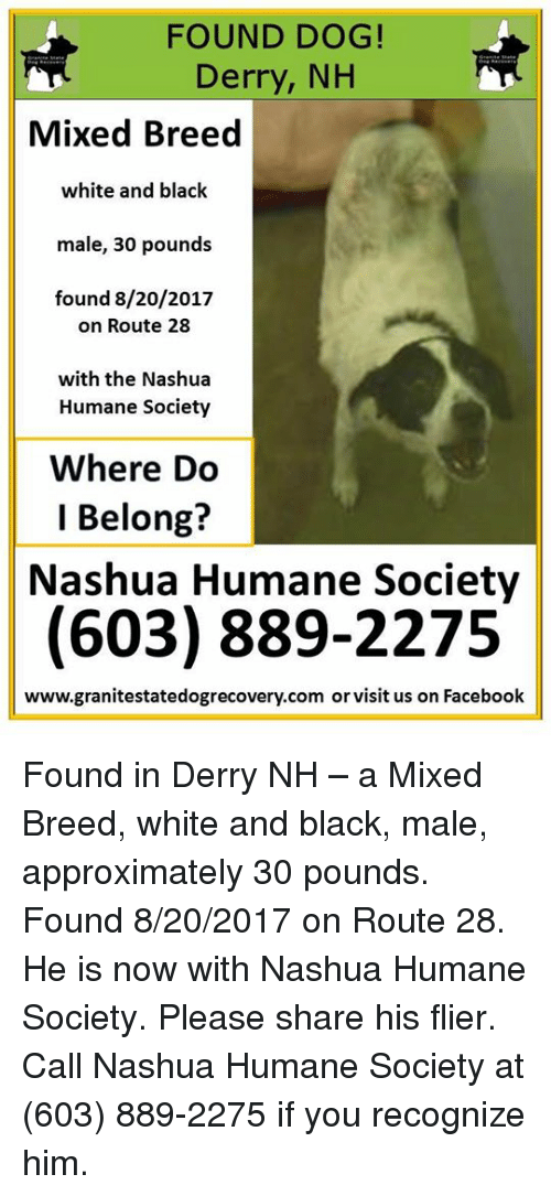 found dog derry nh mixed breed white and black male 27258287 found dog! derry nh mixed breed white and black male 30 pounds