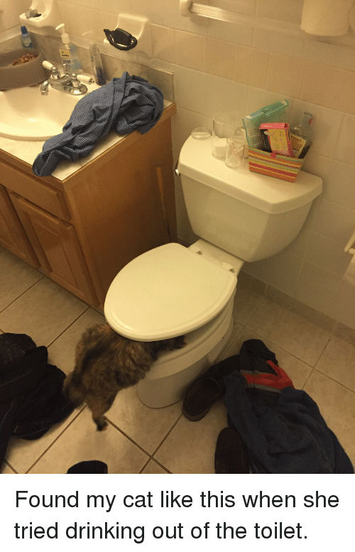 found my cat like this when she tried drinking out of the