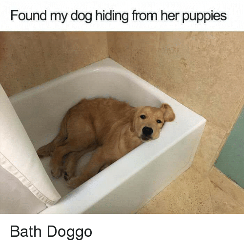 Dog Hiding From Puppies