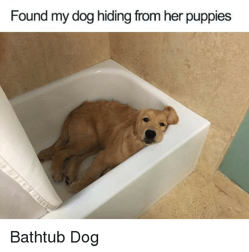 Dog Hiding From Her Puppies