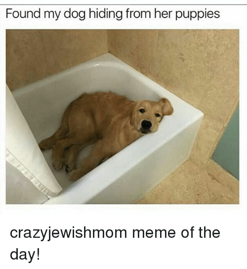 Meme, Puppies, and Jewish: Found my dog hiding from her puppies crazyjewishmom meme of the day!