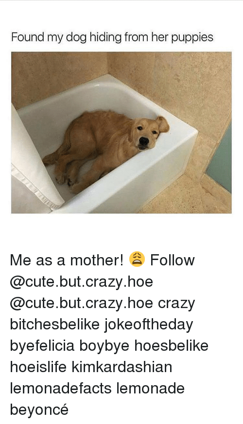 Beyonce, Hoe, and Hoes: Found my dog hiding from her puppies Me as a mother! 😩 Follow @cute.but.crazy.hoe @cute.but.crazy.hoe crazy bitchesbelike jokeoftheday byefelicia boybye hoesbelike hoeislife kimkardashian lemonadefacts lemonade beyoncé