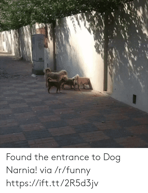 narnia: Found the entrance to Dog Narnia! via /r/funny https://ift.tt/2R5d3jv