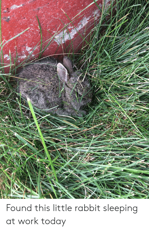 sleeping at work: Found this little rabbit sleeping at work today
