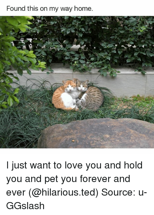 forever and ever: Found this on my way home. I just want to love you and hold you and pet you forever and ever (@hilarious.ted) Source: u-GGslash