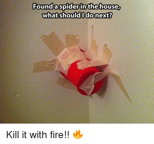 Dank, Fire, and House: Foundaspiderin the house,  what should I do next? Kill it with fire!! 🔥