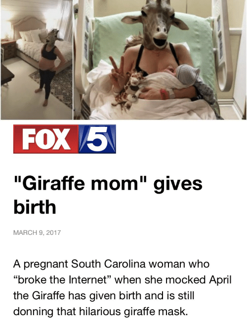 """Internet, Pregnant, and Giraffe: FOX /5  """"Giraffe mom"""" gives  birth  MARCH 9, 2017  A pregnant South Carolina woman who  """"broke the Internet"""" when she mocked April  the Giraffe has given birth and is still  donning that hilarious giraffe mask."""